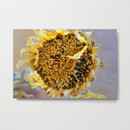 Dried Sunflower Metal Print