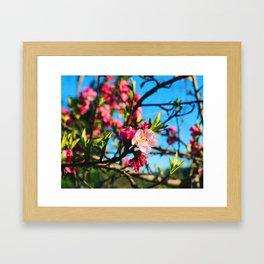 Grandma's Pink Flowers Framed Art Print