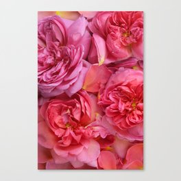 English Rose Collection Canvas Print