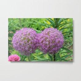 Double Giant Purple Allium Flower Metal Print