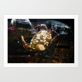 Crab on a Crate Art Print