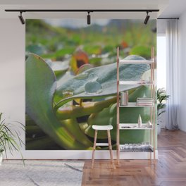 Watercolor Forb, Dimple Leaved Succulant 02, Dallvik, Iceland Wall Mural