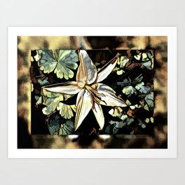 The Delicate Lily Art Print
