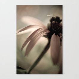 Coneflower Visit Canvas Print