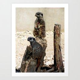 Meerkat Duo Art Print