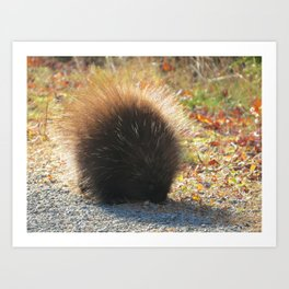 Porcupine Looking Glamorous in the Sun's Rays Art Print