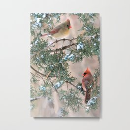 Winter Pair Cardinals (v) Metal Print