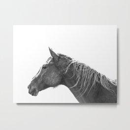 Muddy Horse, Black and White Metal Print