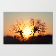 sunset in august Canvas Print