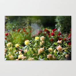 Through the haze of roses Canvas Print
