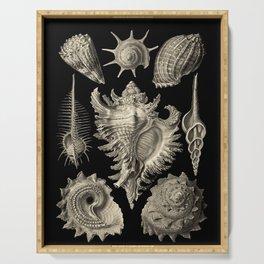 Ernst Haeckel Prosobranchia Sea Shells Serving Tray