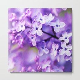 Watercolor Lilac Blossoms Metal Print