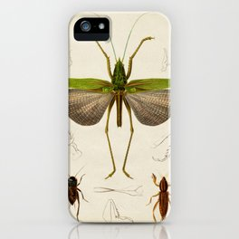 Curious Green Insect, Grasshopper Vintage Style iPhone Case