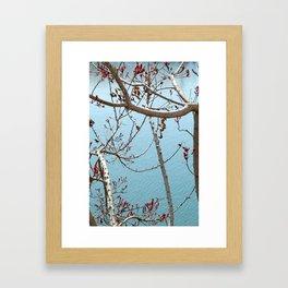 Birch Bay, Washington Framed Art Print