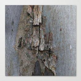 Eucalyptus Tree Bark and Wood Texture 16 Canvas Print