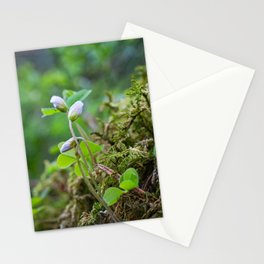 Romantic white spring flower Stationery Cards