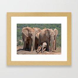 Family of elephants, Africa wildlife Framed Art Print