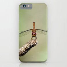 Autumn Meadowhawk Dragonfly iPhone 6s Slim Case