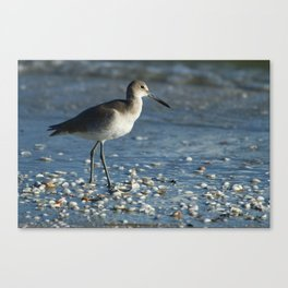 Beach Bum Canvas Print