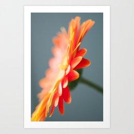 Gerbera Daisy Orange Art Print