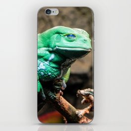 Waxy Monkey Frog, Museum of the Rockies, Bozeman MT iPhone Skin