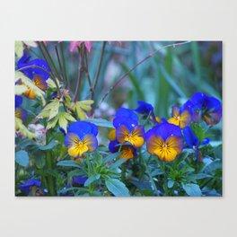 Vivacious Violas Canvas Print