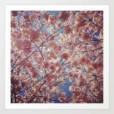 Blossom Series 2 Art Print