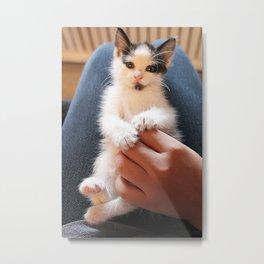 Poptarts the Kitten 2 Metal Print