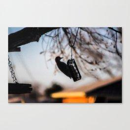 Woodpecker 1 Canvas Print