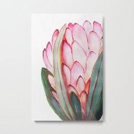 Protea in pink Metal Print