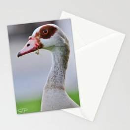 Egyptian Goose Stationery Cards