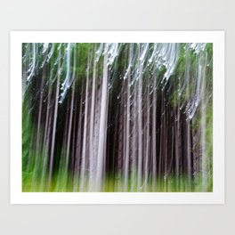 Minnesota Pines Art Print