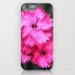 Cluster of Pink Dianthus iPhone Case