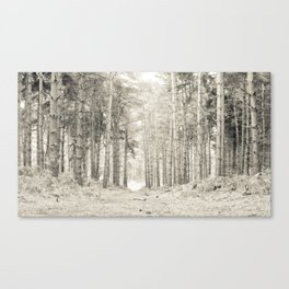Quiet Forest I Canvas Print