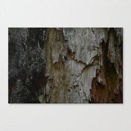 Kings Canyon Tree no.3 Canvas Print