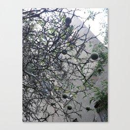 underneith Canvas Print