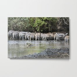 zebras in a line, Serengeti National Park, Tanzania Metal Print