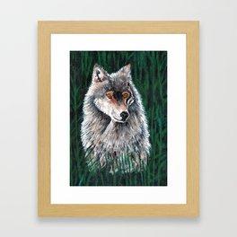 Grey Canadian Wolf Framed Art Print
