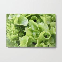 Lettuce 1 Metal Print