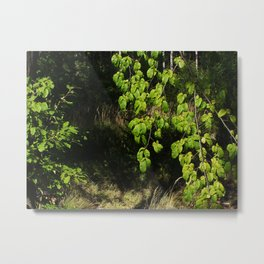 Forest and Green Leaves Metal Print