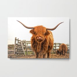 Highland Cow in a Fence Metal Print