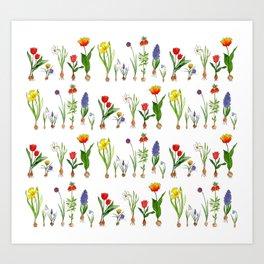 Spring Flowering Bulbs Art Print