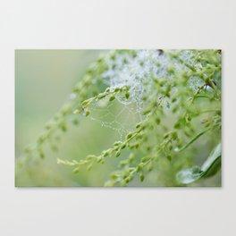 Tiny Spiderweb Canvas Print