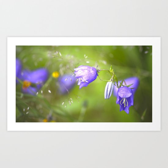 Bluebells in The Meadow  Art Print