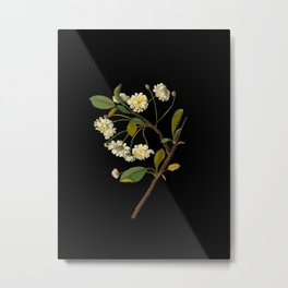 Prunus Cerasus Mary Delany Vintage Botanical Paper Flower Collage Metal Print