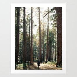 Hiker Girl In Giant Forest Photography Art Print
