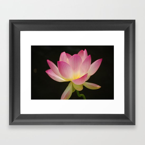 Lotus Blossom Flower 16 Framed Art Print
