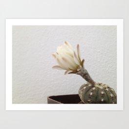Cactus blooming Art Print