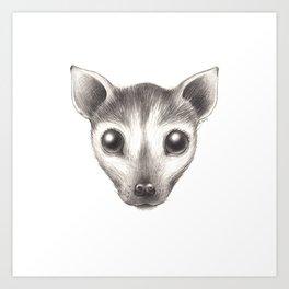 Spectacled Flying Fox Art Print