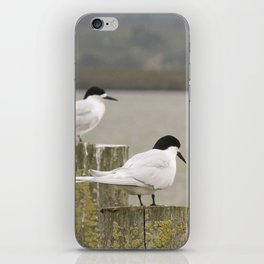 Master Oyster Catchers iPhone Skin